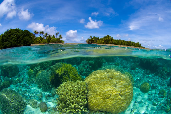 marshall_islands_coral_reef_lrg.jpg