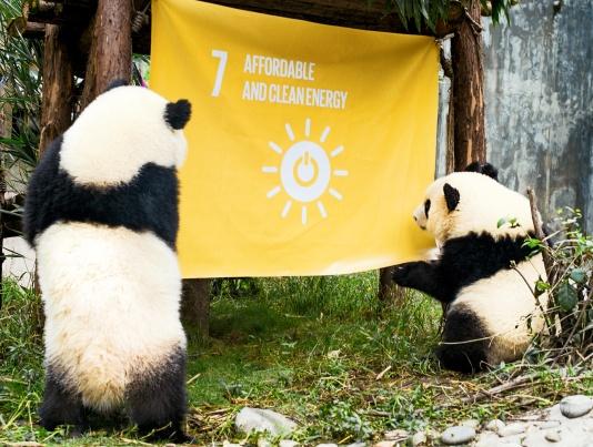 Pandas_goal 7